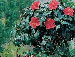 Foto Blütenpracht